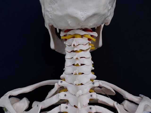 腰、首の痛み(脊椎)